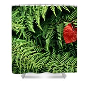 Mountain Bindweed And Fern Fronds Shower Curtain