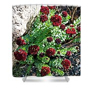 Mountain Blooms Shower Curtain
