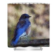 Mountain Bluebird Painterly Shower Curtain