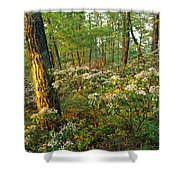 Mountain Laurel Blooming In A Hyner Shower Curtain