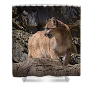 Mountain Lion On The Prowl Shower Curtain