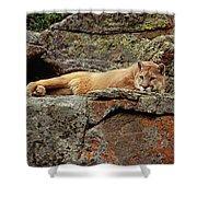 Mountain Lion Puma Concolor Lounging Shower Curtain by Gerry Ellis