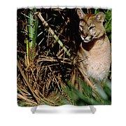 Mountain Lion Puma Concolor Portrait Shower Curtain