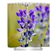 Mountain Lupine Glacier National Park Shower Curtain