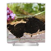 Mourning Cloak Butterfly Lovin' Shower Curtain