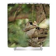 Mourning Dove Nesting Shower Curtain