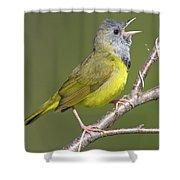 Mourning Warbler Oporornis Philadelphia Shower Curtain