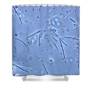 Mouth Bacteria, Lm Shower Curtain