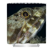 Mouth Of A Variegated Lizardfish, Papua Shower Curtain