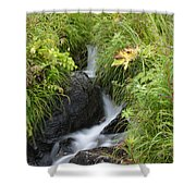 Moving Quick Shower Curtain