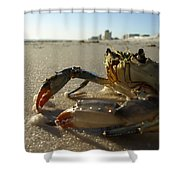 Mr. Crabs Shower Curtain
