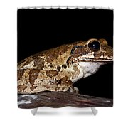 Mr. Toad Shower Curtain
