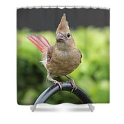 Mrs Cardinal Shower Curtain by Carol Groenen