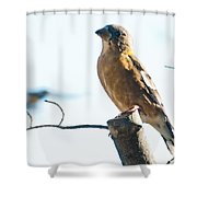 Mrs. Grosbeak Shower Curtain