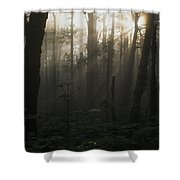 Mt. Hood National Forest Near Larch Shower Curtain
