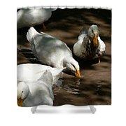 Muddy Ducks Shower Curtain