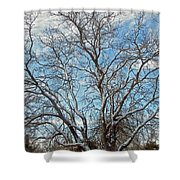 Mulberry Tree In Snow Shower Curtain