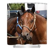 Mule Days Benson Shower Curtain