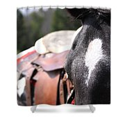Mule Days Photo Shower Curtain