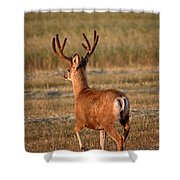 Mule Deer Buck In An Alberta Field Shower Curtain