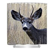Mule Deer Buck Shower Curtain