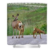 Mule Deer Doe And Twin Fawns Shower Curtain
