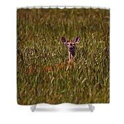 Mule Deer In Wheat Field, Saskatchewan Shower Curtain
