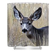 Mule Deer Spike Shower Curtain