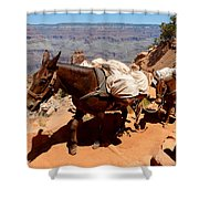 Mule Train Shower Curtain