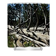 Mules Ear Timber Shower Curtain