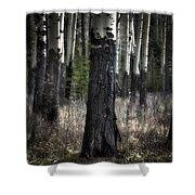 Muleshoe Trees Banff Shower Curtain