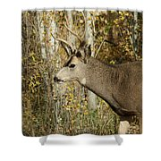 Mulie Buck 3 Shower Curtain