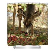 Mulie Buck 4 Shower Curtain