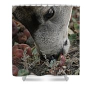 Mulie Buck 5 Shower Curtain