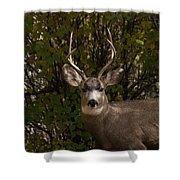 Mulie Buck Shower Curtain