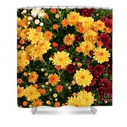 Multi Colored Mums Shower Curtain