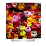 Multicolor Shower Curtain