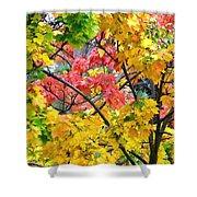 Multicolored Maple Shower Curtain