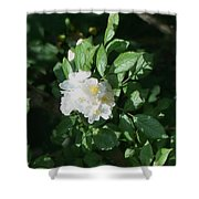 Multiflora Bouquet Shower Curtain