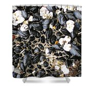Muscles And Barnacles Shower Curtain