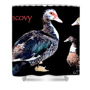 Muscovy Shower Curtain