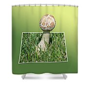 Mushroom 02 Shower Curtain