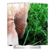 Mushroom And Dewdrops Shower Curtain