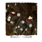Mushroom Coral Ghost Shrimps Hiding Shower Curtain