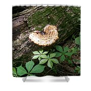 Mushroom Heart Forest Shower Curtain