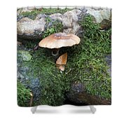 Mushroom In Moss Shower Curtain