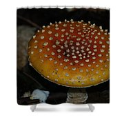 Mushroom Shower Curtain