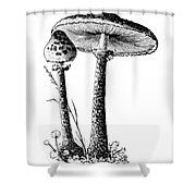 Mushroom: Parasol Agaric Shower Curtain
