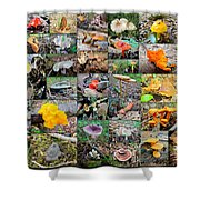 Mushroom Planet - Montgomery County Pa Shower Curtain