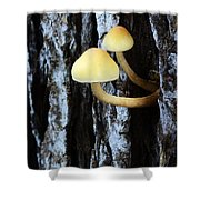 Mushrooms 3 Shower Curtain